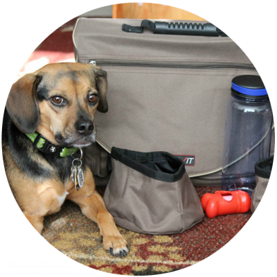 Enter to win a Solvit HomeAway Pet Travel Organizer Kit.
