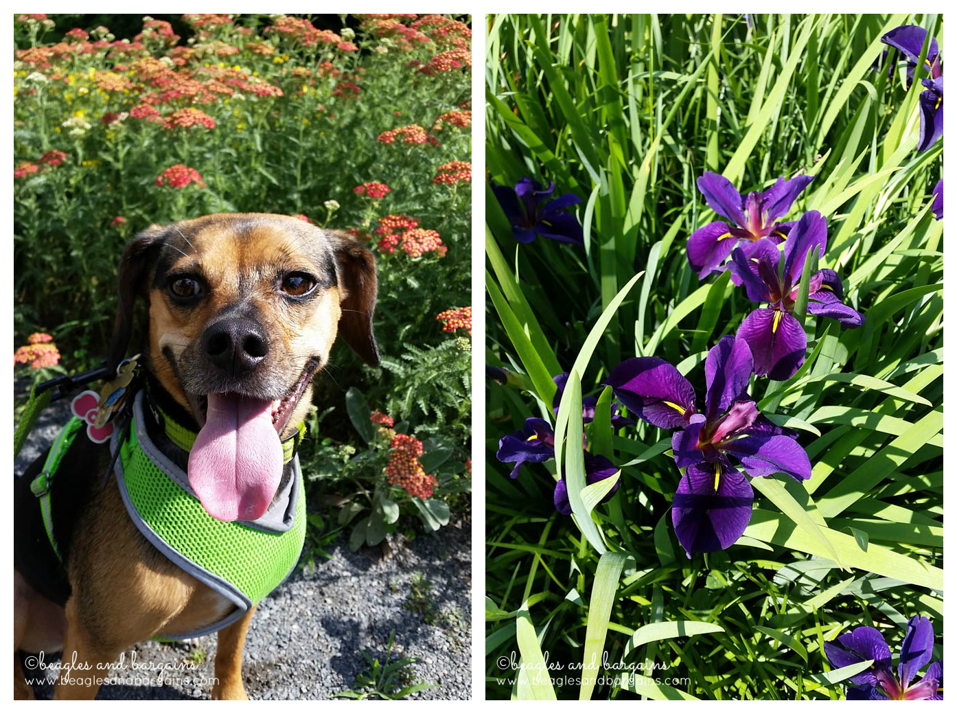We stopped to smell the beautiful flowers on the W&OD Trail.