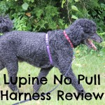 Easy Walking with Lupine's No Pull Harness