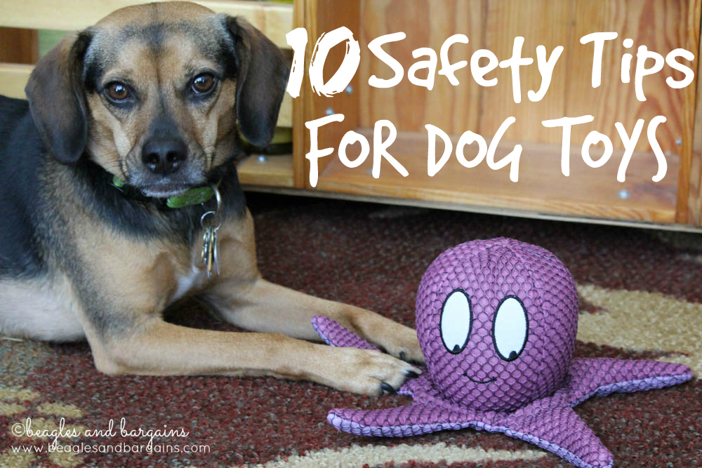 10 Safety Tips for Dog Toys