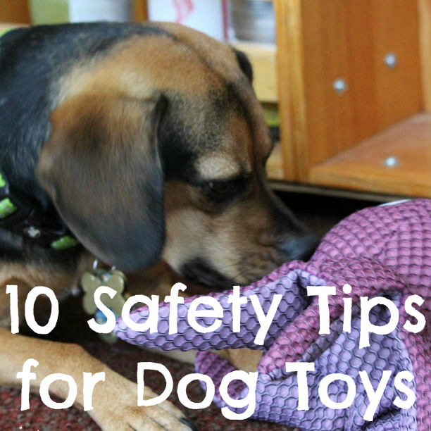 52 Snapshots of Life Photo Challenge - Week 23: PLAY - 10 Safety Tips for Dog Toys