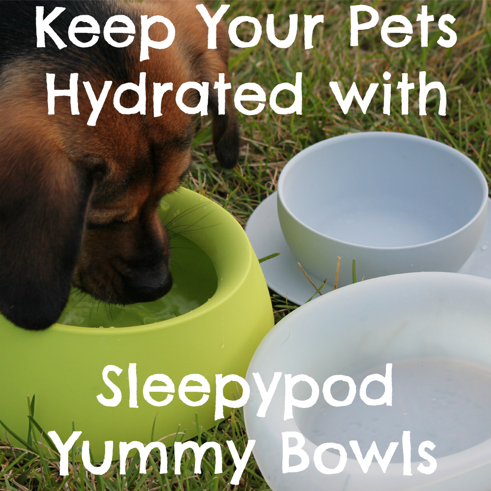 Keep Your Pets Hydrated with Sleepypod Yummy Travel Bowls