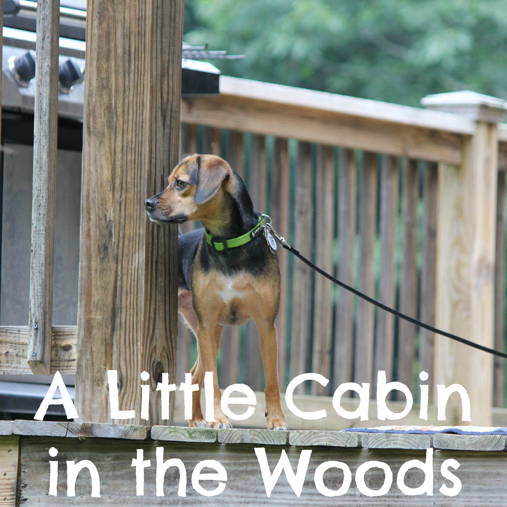 A Little Cabin in the Woods