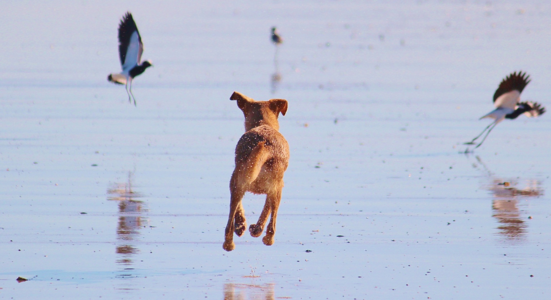 Dogs often go missing on pet friendly vacations.