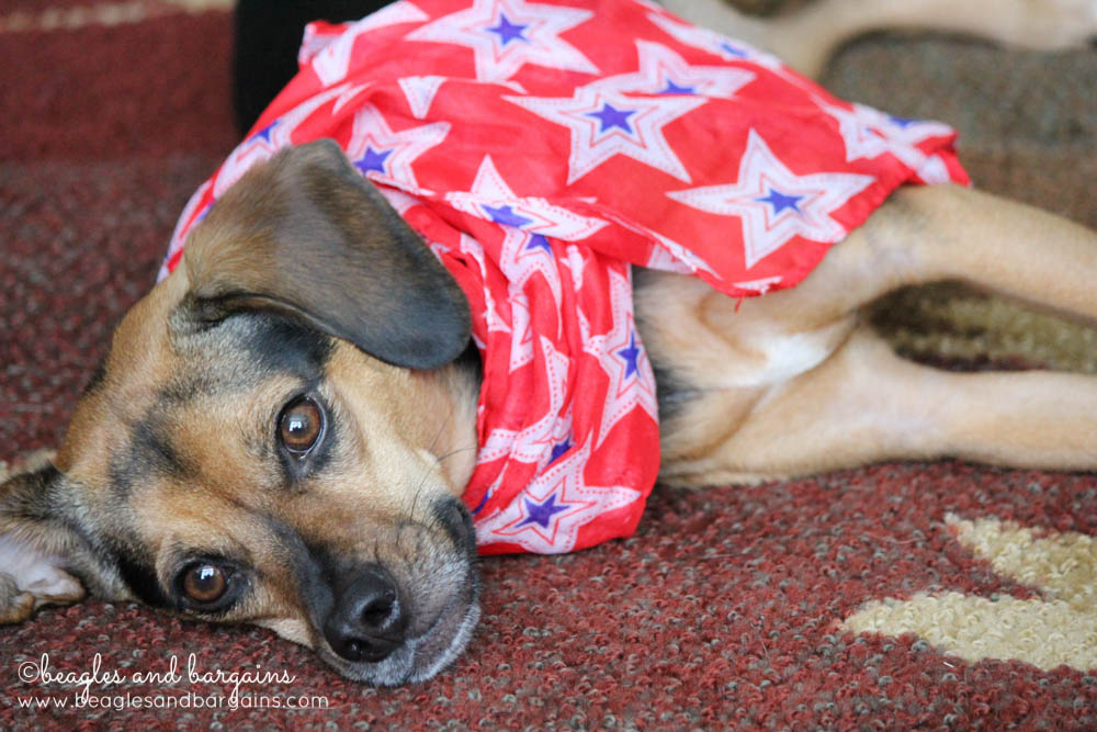 Luna is ready to be Patriotic for Independence Day!