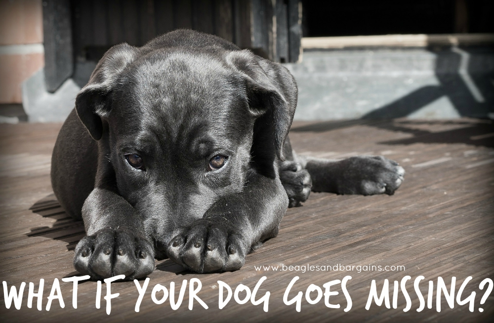 What if your dog goes missing?