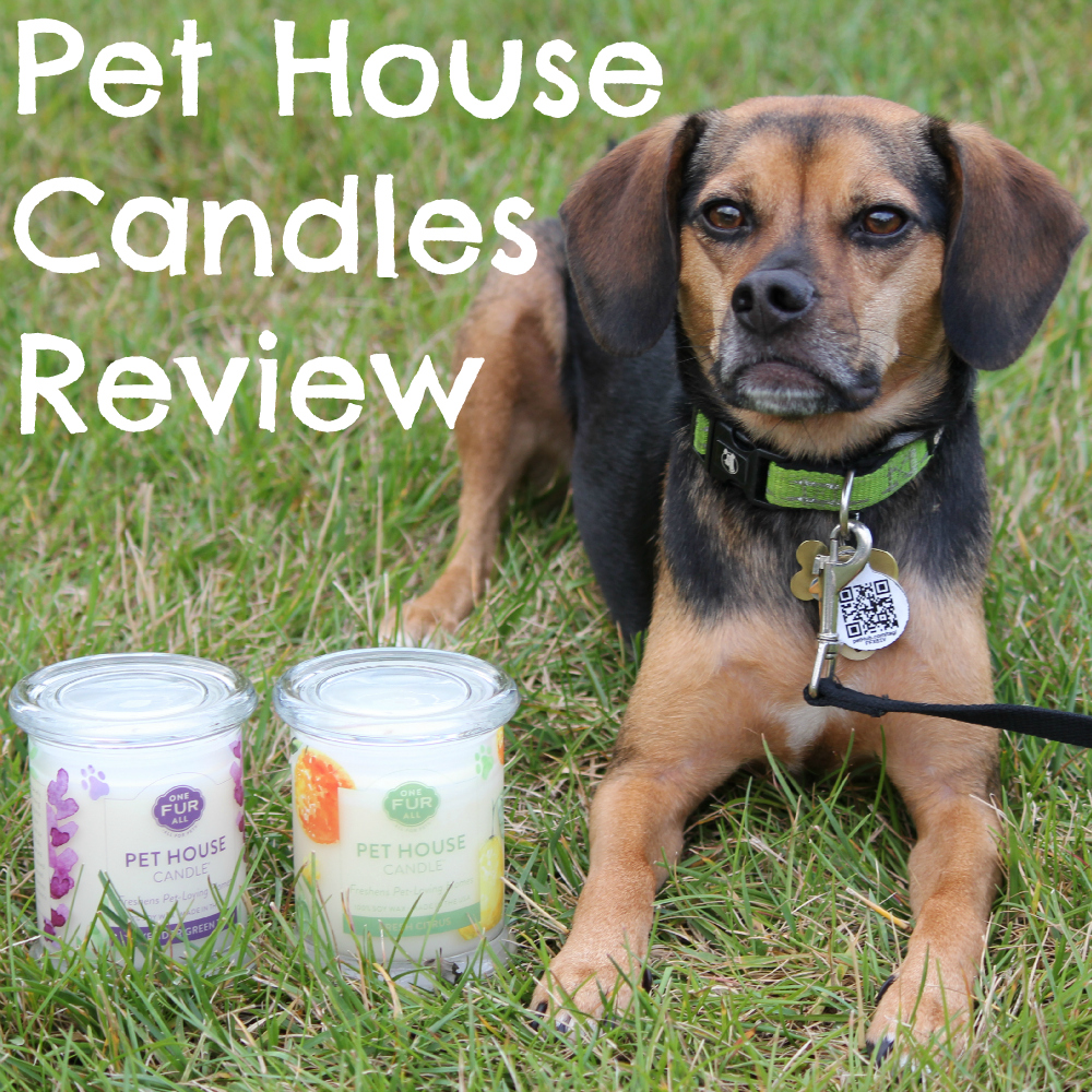One Fur All Pet House Candles Review
