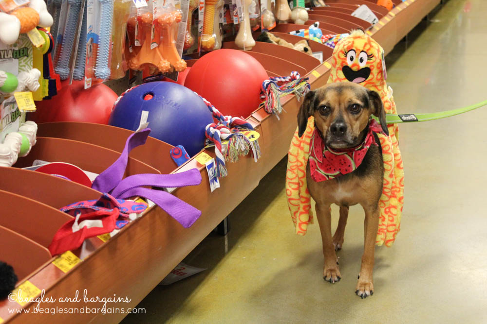 Luna picks out new toys from PetSmart