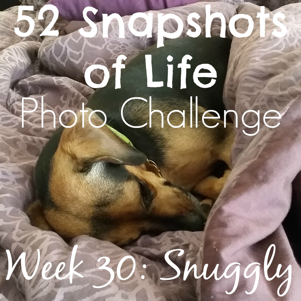 52 Snapshots of Life - Snuggly - Just Snuggle Your Worries Away