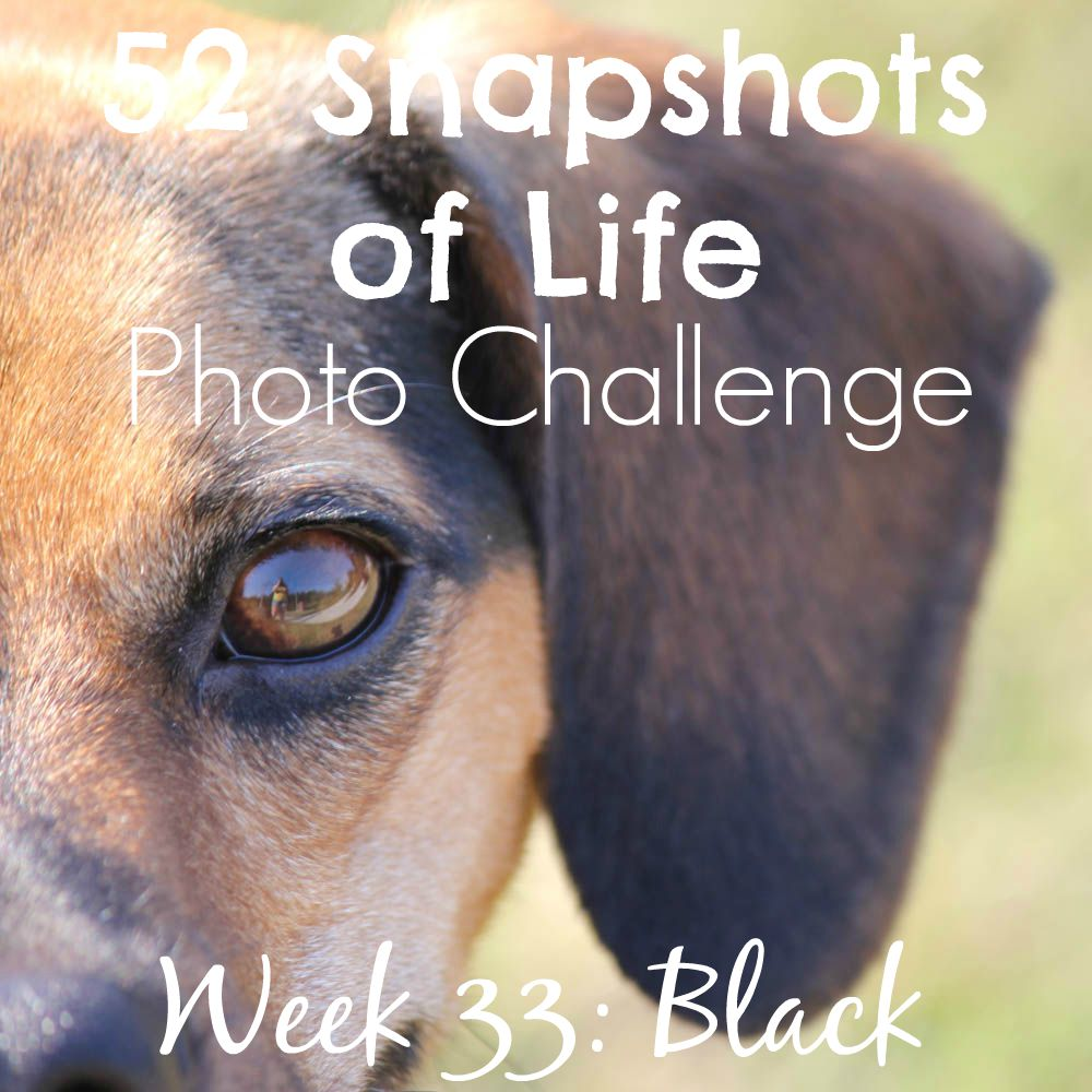 52 Snapshots of Life - Black - Dog Hair is the New Black