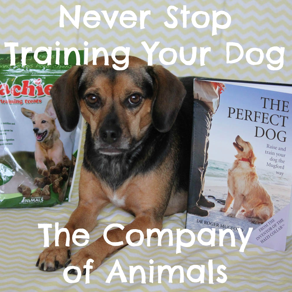 Never Stop Training Your Dog with The Company of Animals