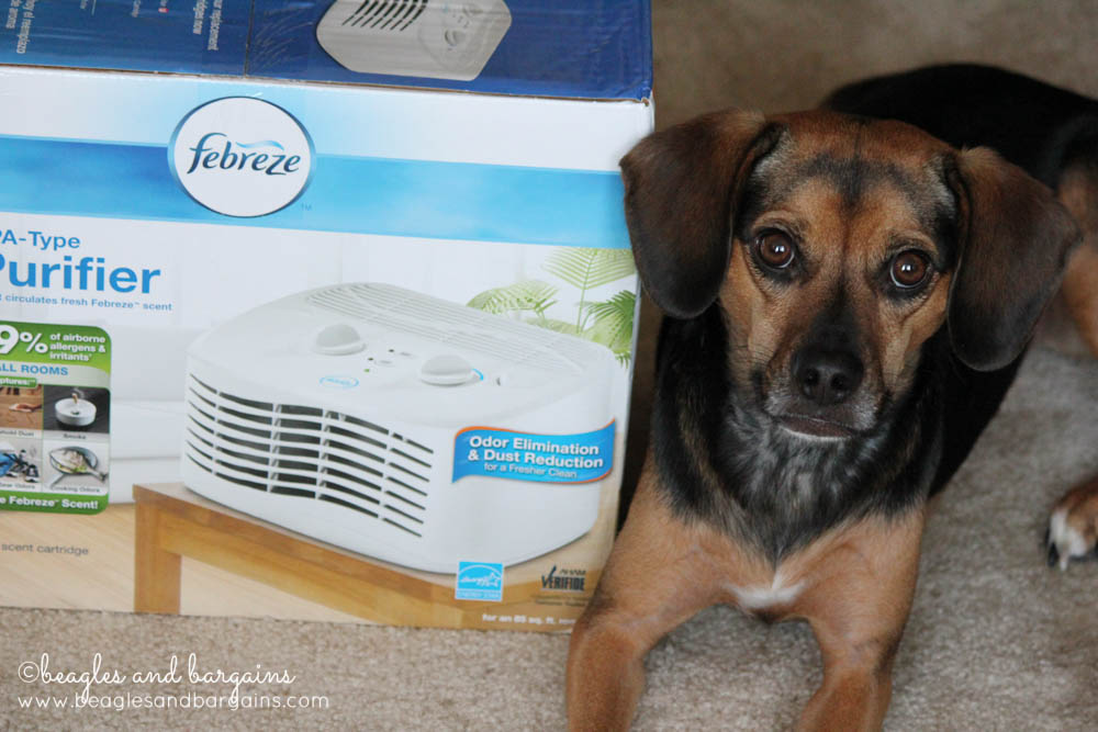 Luna with our new Febreze Air Purifier