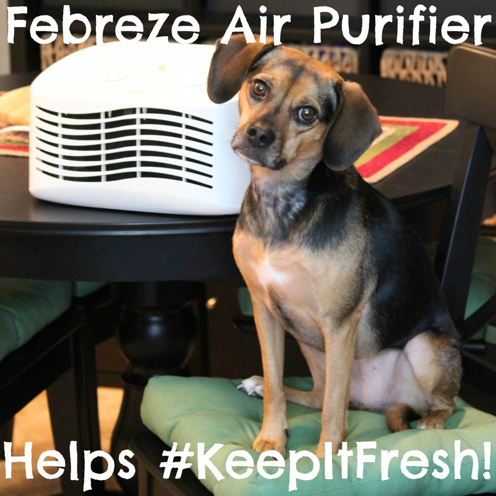 Febreze Air Purifier Helps #KeepItFresh