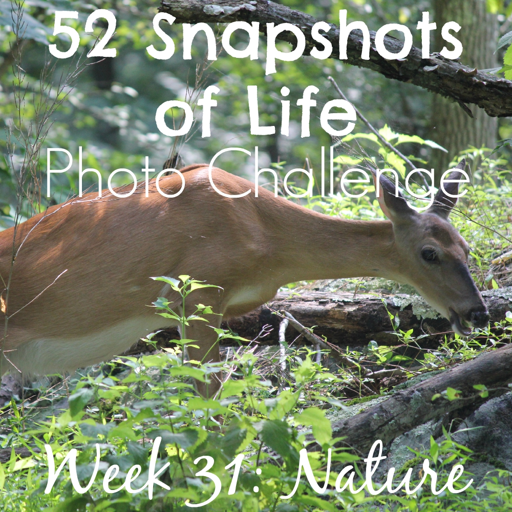 52 Snapshots of Life - Nature - Getting in Touch with Virginia's Nature