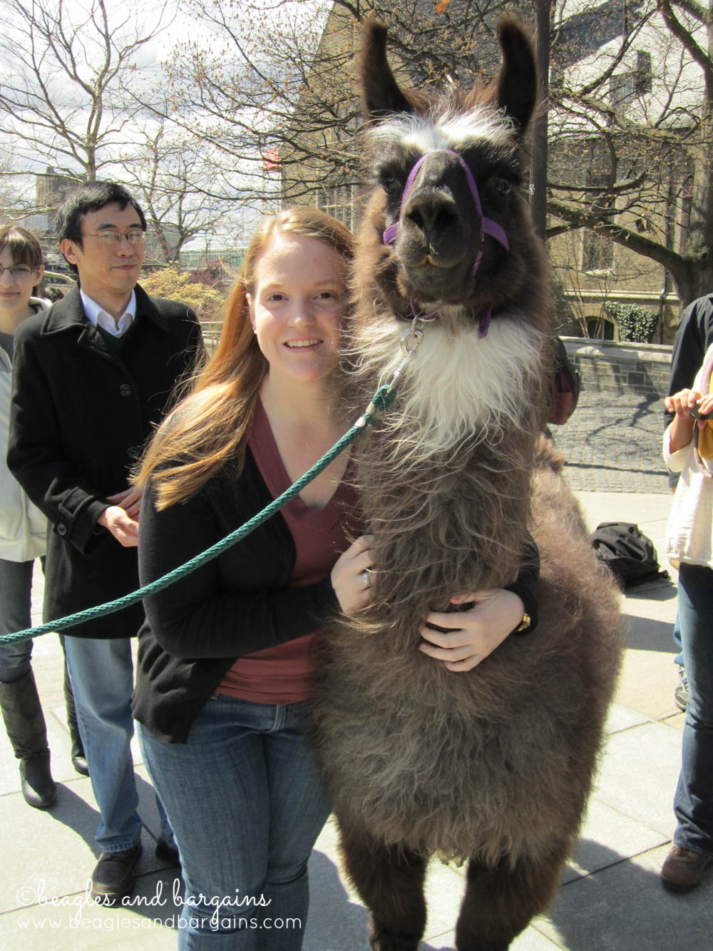 8 Photos of Happiness - Llamas