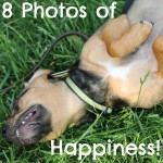 8 Photos of Happiness