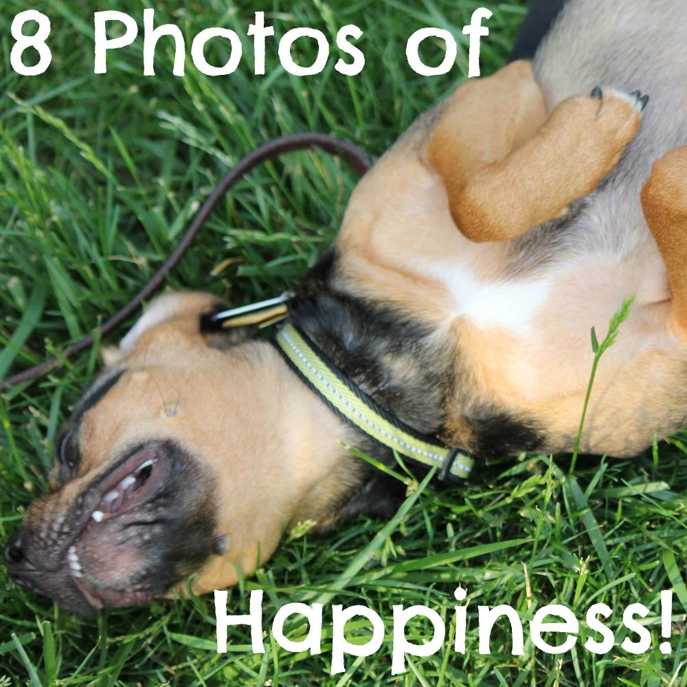 8 Photos of Happiness!