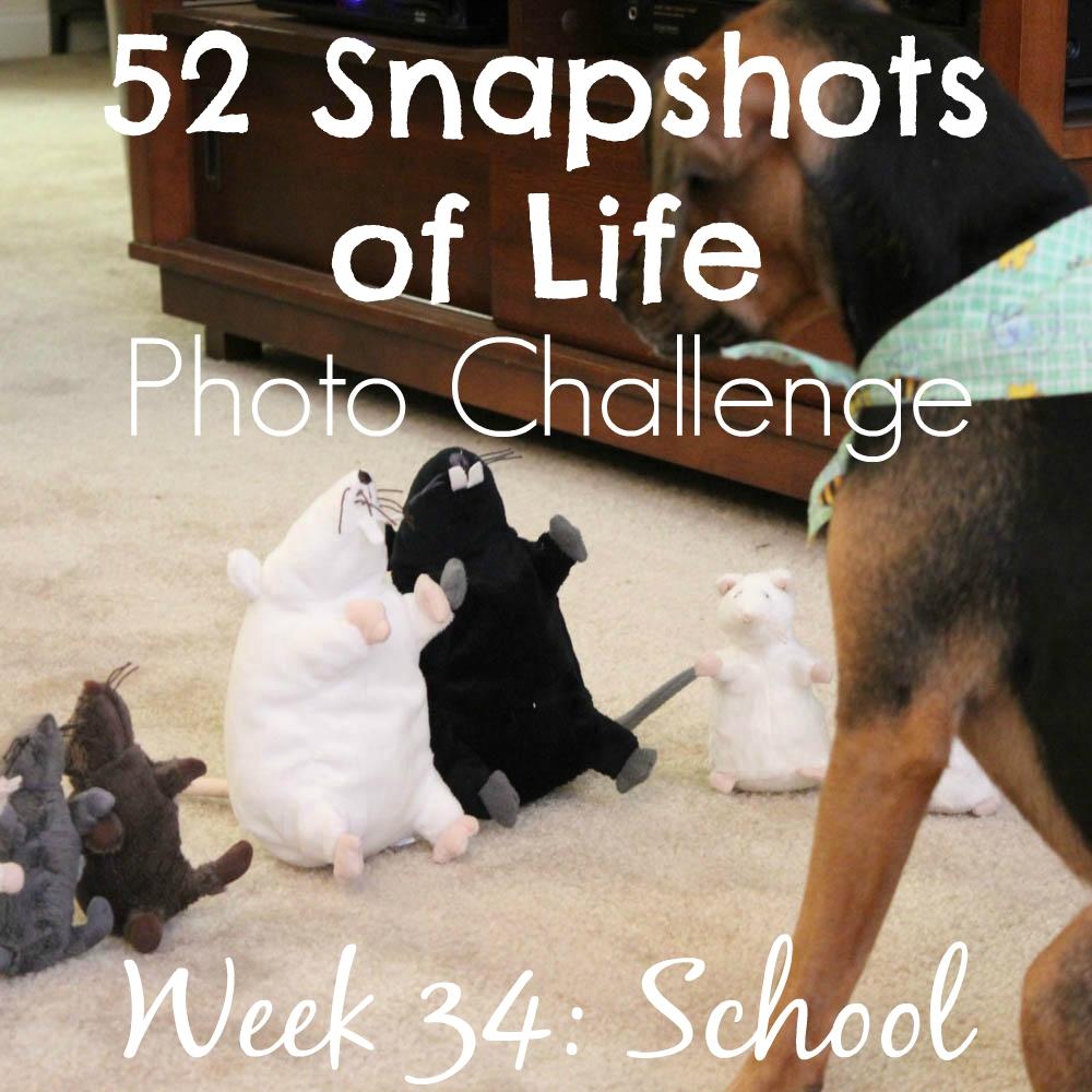 52 Snapshots of Life - Week 34 - School - Back to School at Luna's Academy