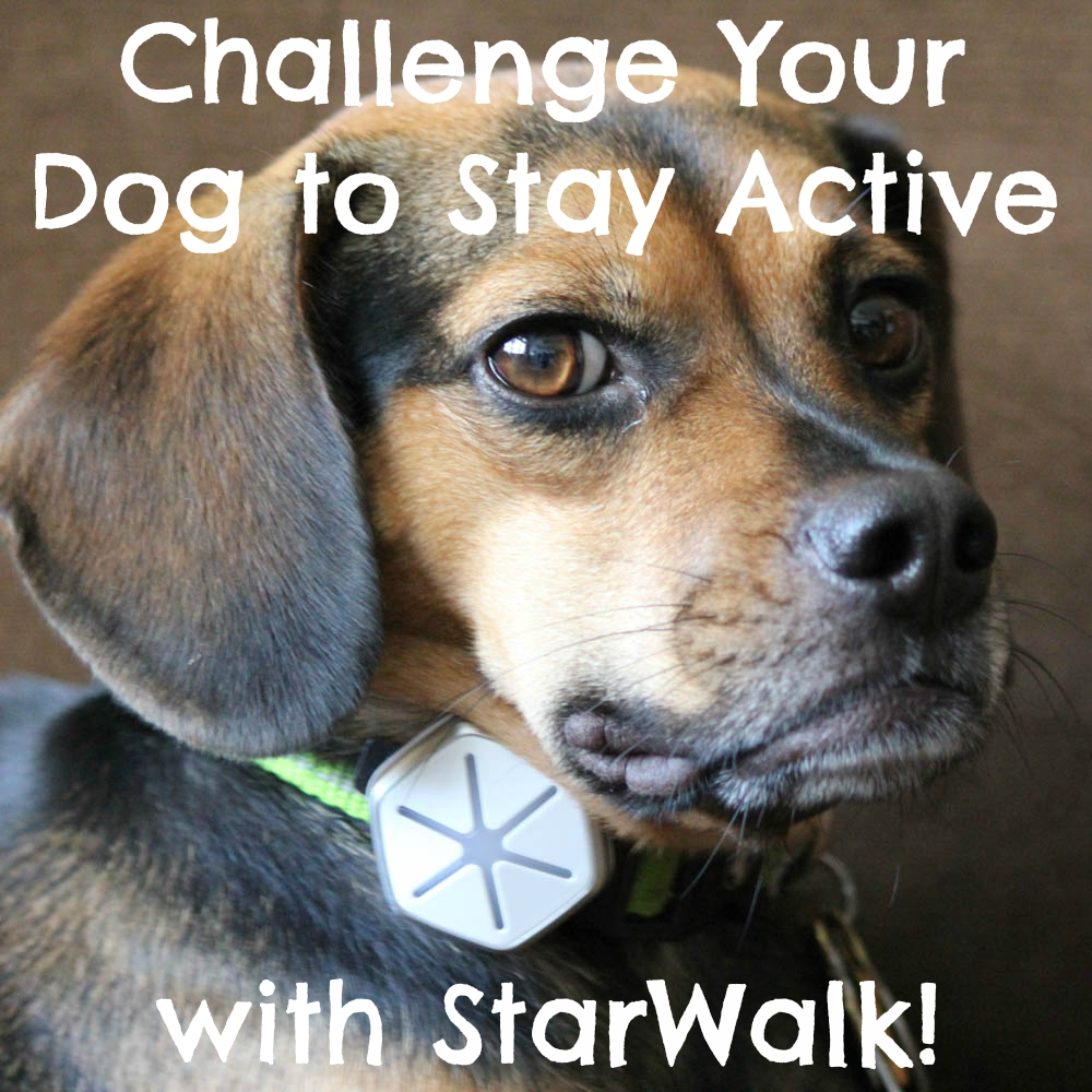 Challenge Your Dog to Stay Active with StarWalk!