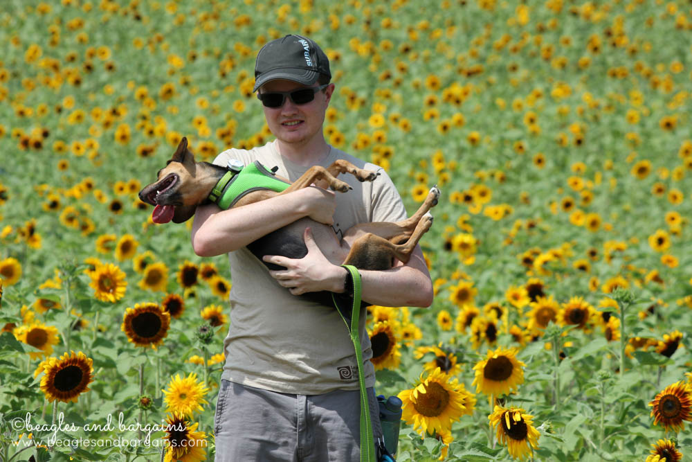 Luna and Struan hang out at a Sunflower Field