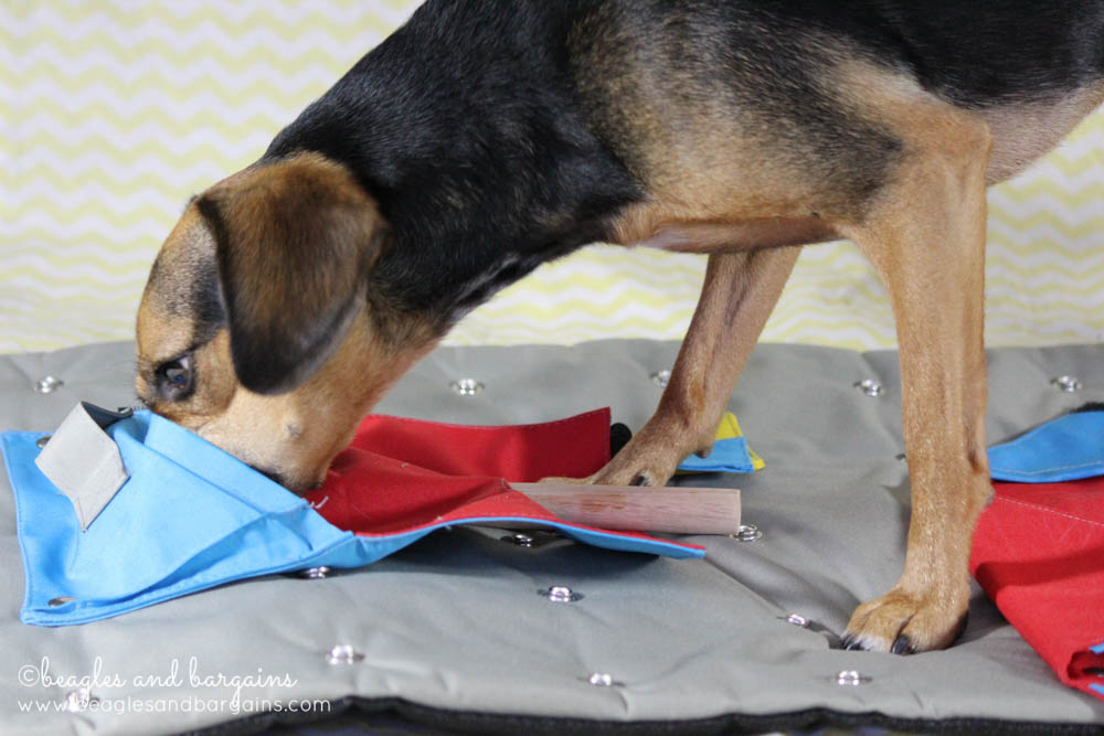 Luna finds a treat in the KRUUSE BUSTER Activity Mat