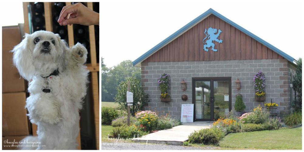 Bogie at Kings Garden Vineyards on Seneca Lake. Pet friendly!