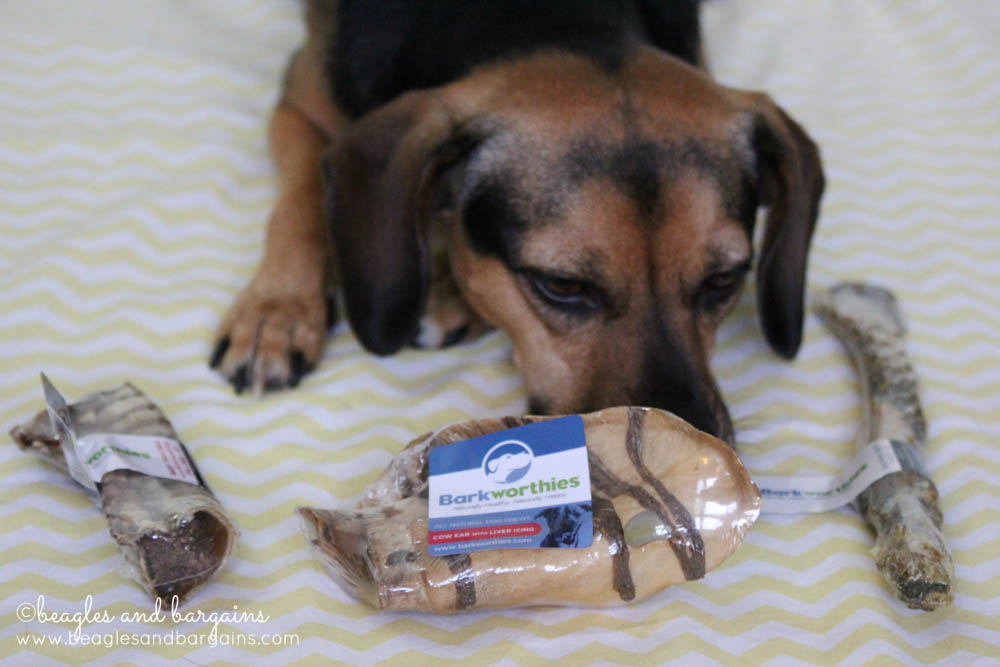 Luna checks out the new Barkworthies Australian Gourmet Chews