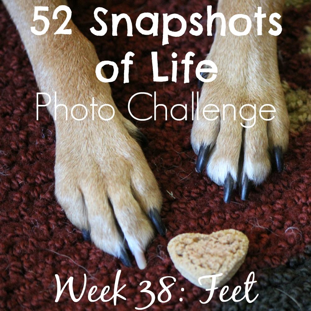 52 Snapshots of Life - Week 38 - Feet - Love For Luna's Little Feet
