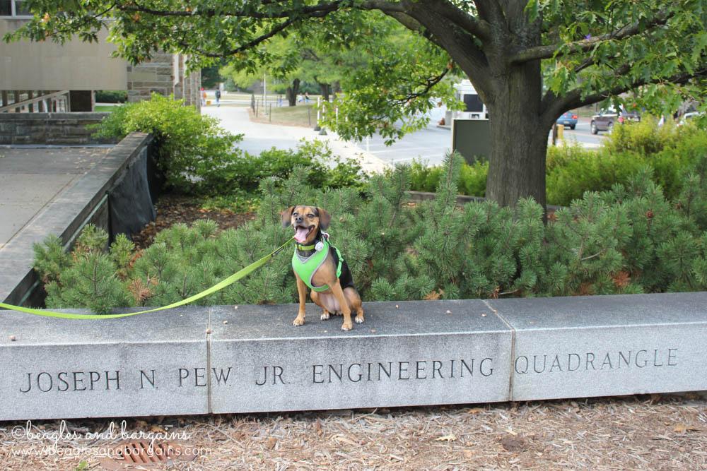 Luna on Cornell's Engineering Quad