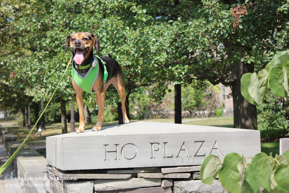 Luna takes on Ho Plaza at Cornell
