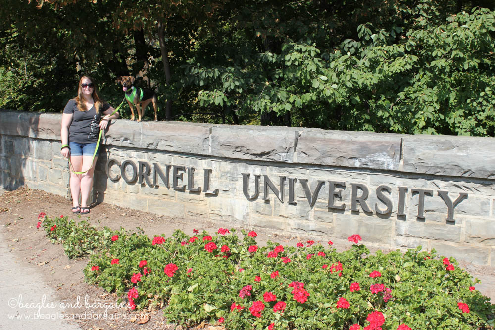 Luna visits Cornell University with me