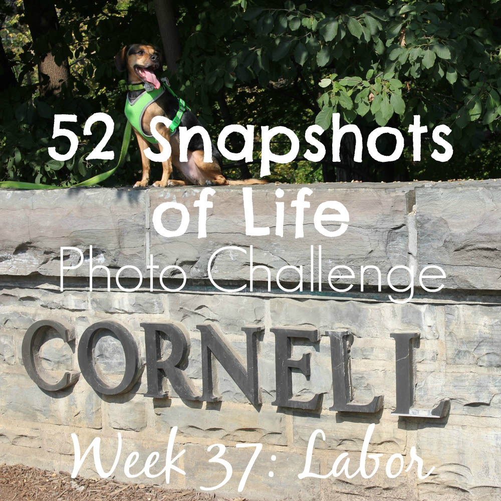 52 Snapshots of Life - Week 37 - Labor - Luna Visits New York's Finger Lakes Over Labor Day Weekend
