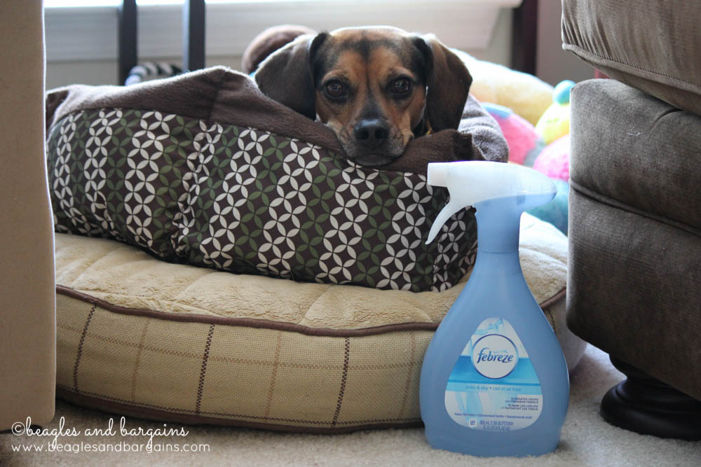Febreze Fabric Refreshers helps with Luna's hoarding!