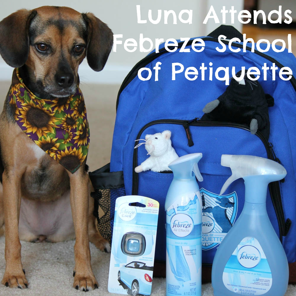 Luna Attends Febreze School of Petiquette