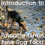Fuel Your Fall Adventures with Pinnacle #PinnacleHealthyPets