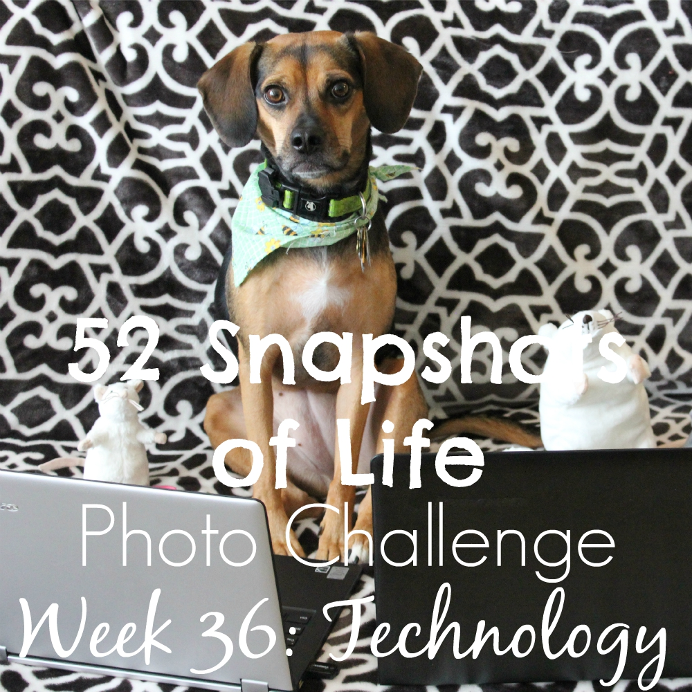 52 Snapshots of Life - Week 36 - Technology - Enroll in Pet Technology 101 at Luna's Academy