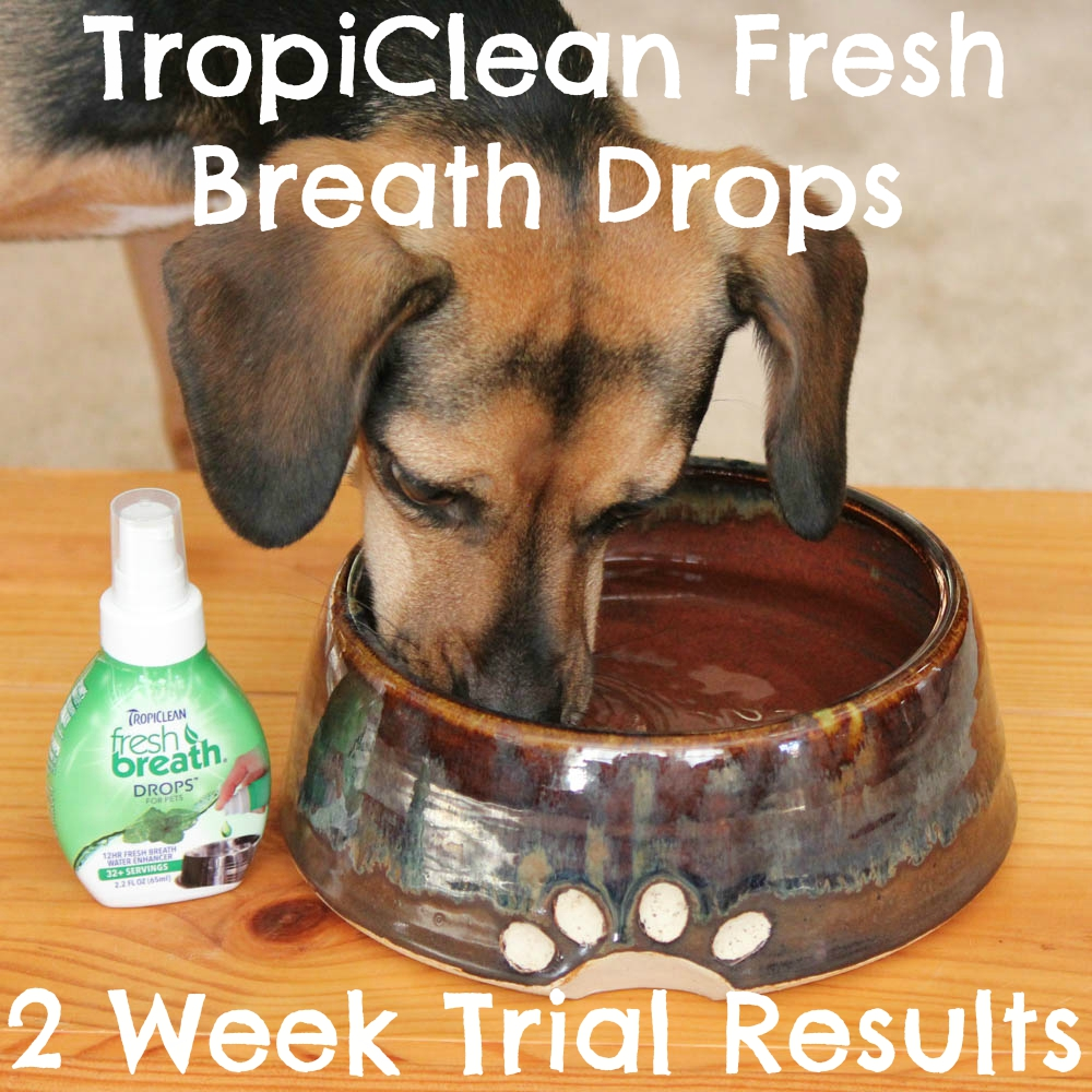 TropiClean Fresh Breath Drops two week trial results