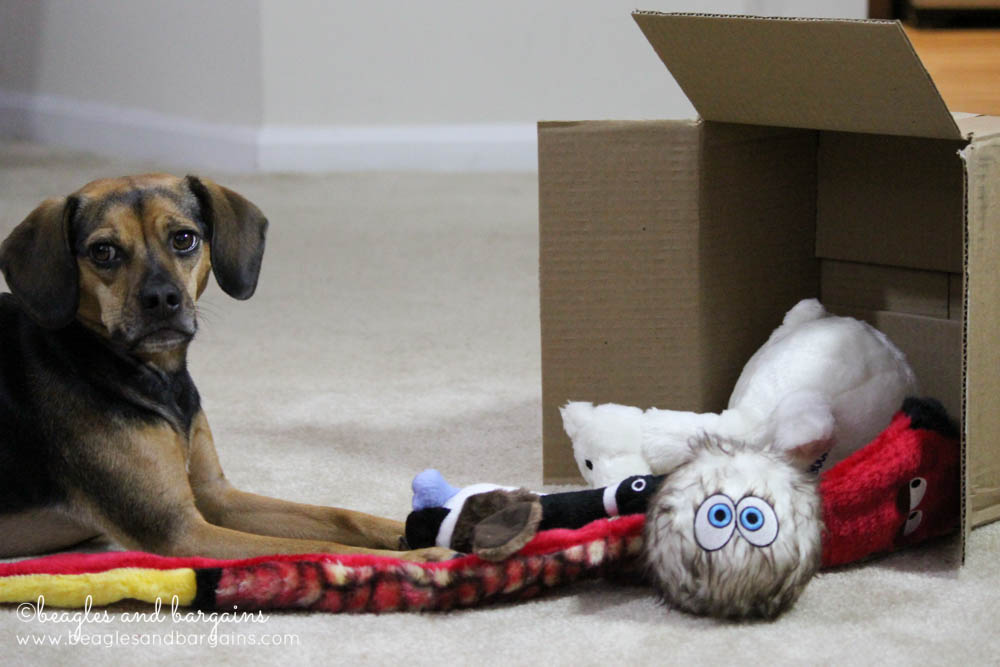 Luna unpacks her new surprise toys and animal friends!