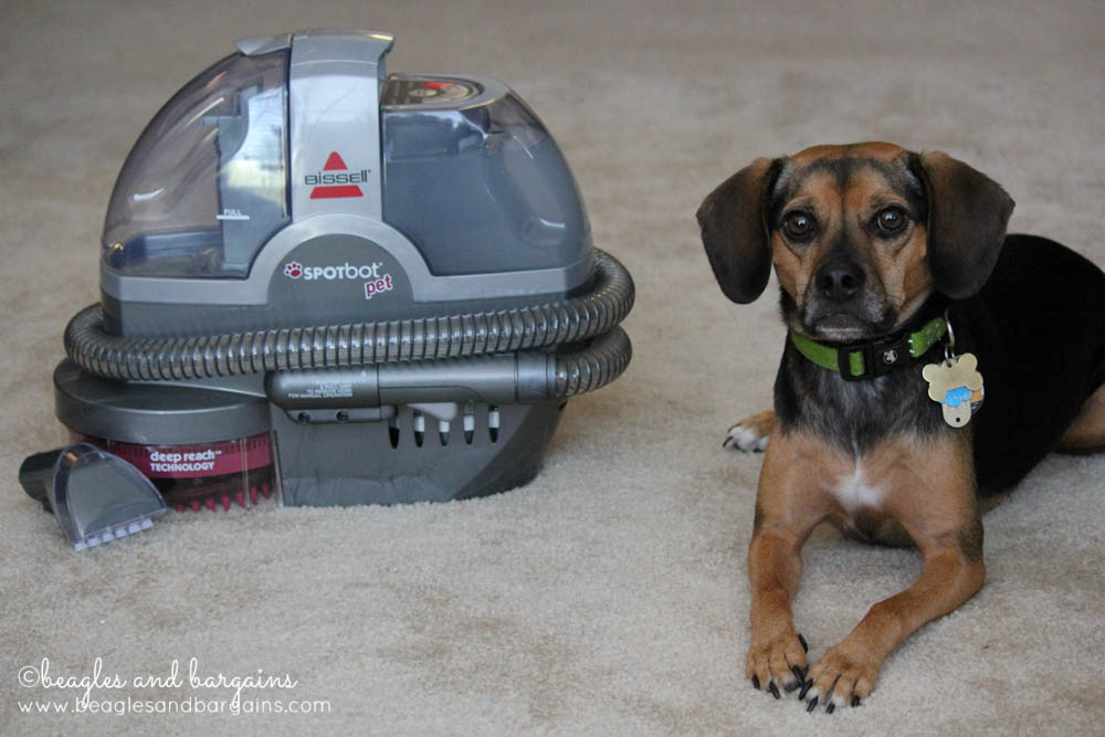 Luna and our BISSELL SpotBot Pet