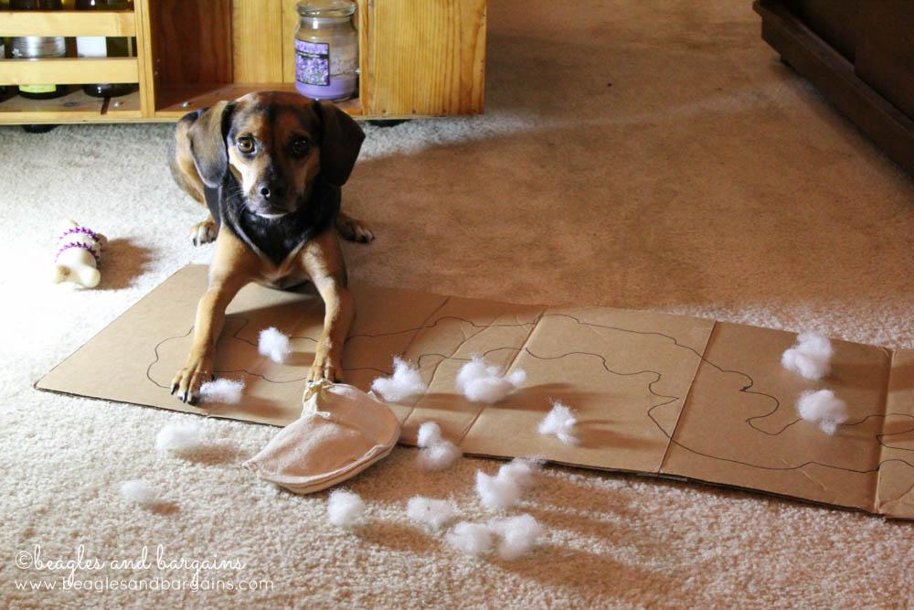 Luna was framed for dog toy murder!