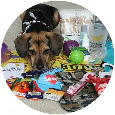 Luna's 3rd Gotcha Day Giveaway Swag Bag Prize Packs - ends 10/25/15