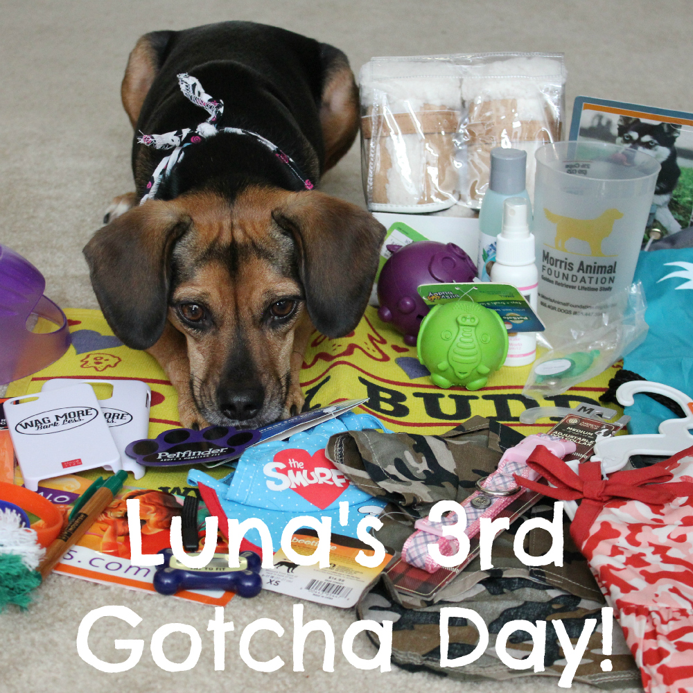 Luna's 3rd Gotcha Day!