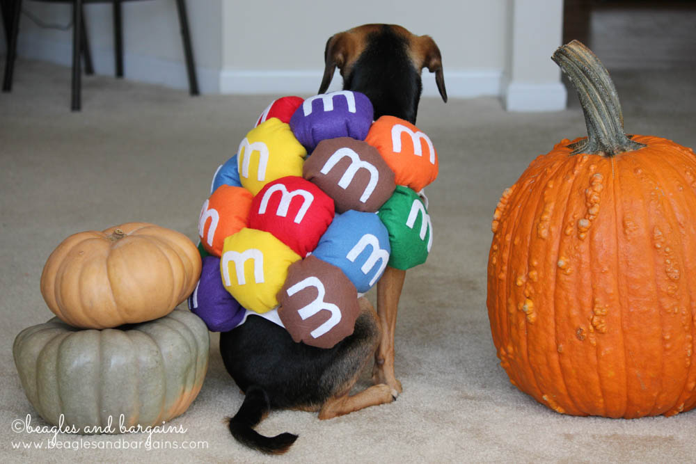This year for Halloween, Luna is going as Mini M&Ms