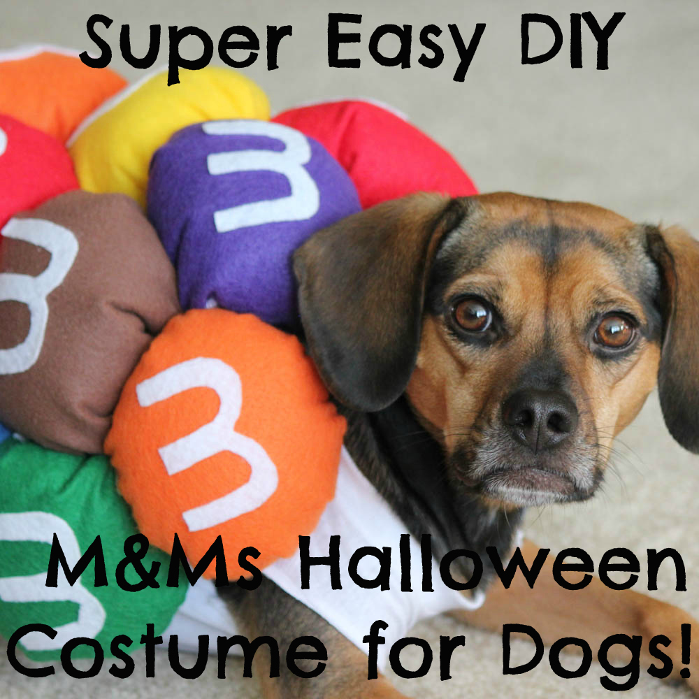 Super Easy DIY M&Ms Halloween Costume for Dogs!