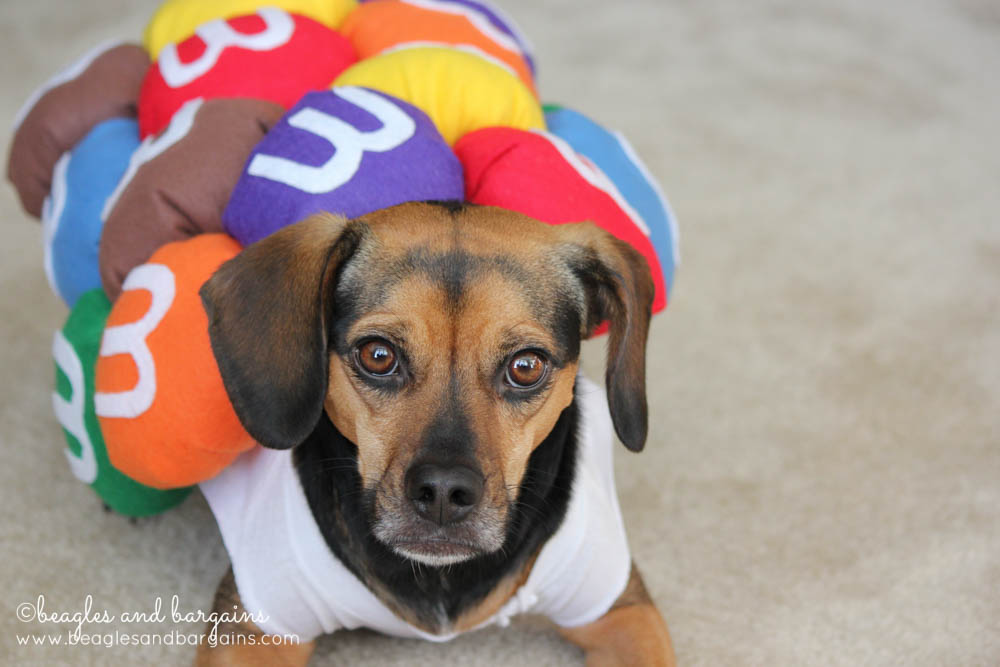 Luna in her Mini M&Ms Halloween Costume for Dogs