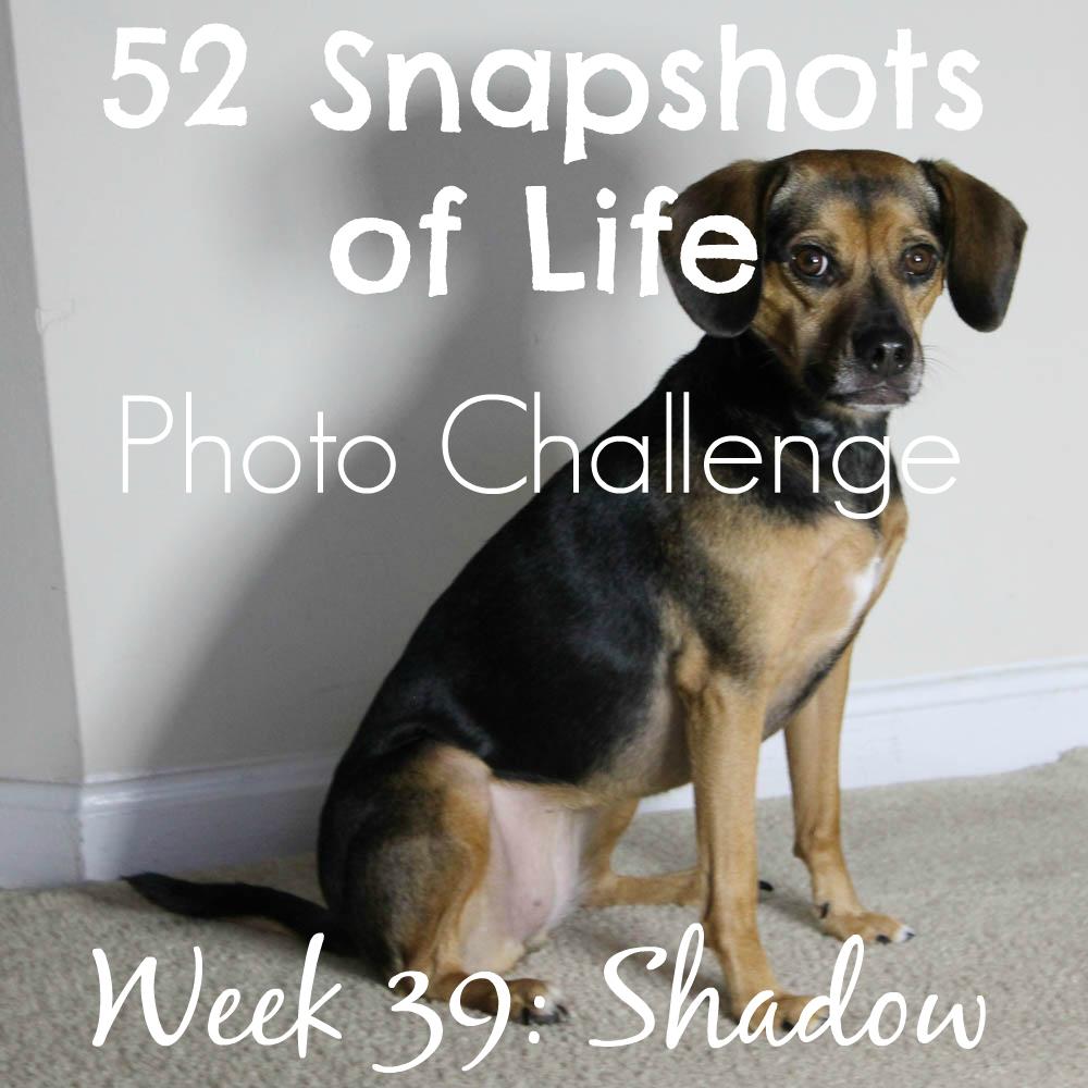52 Snapshots of Life - Week 39 - Shadow - Luna's Shadow in the Spotlight