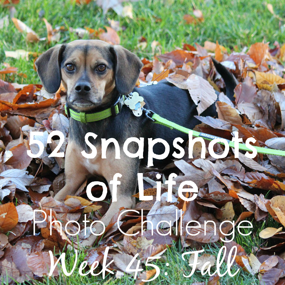 52 Snapshots of Life - Week 45 - Fall - Fall is Finally Here... Sort Of