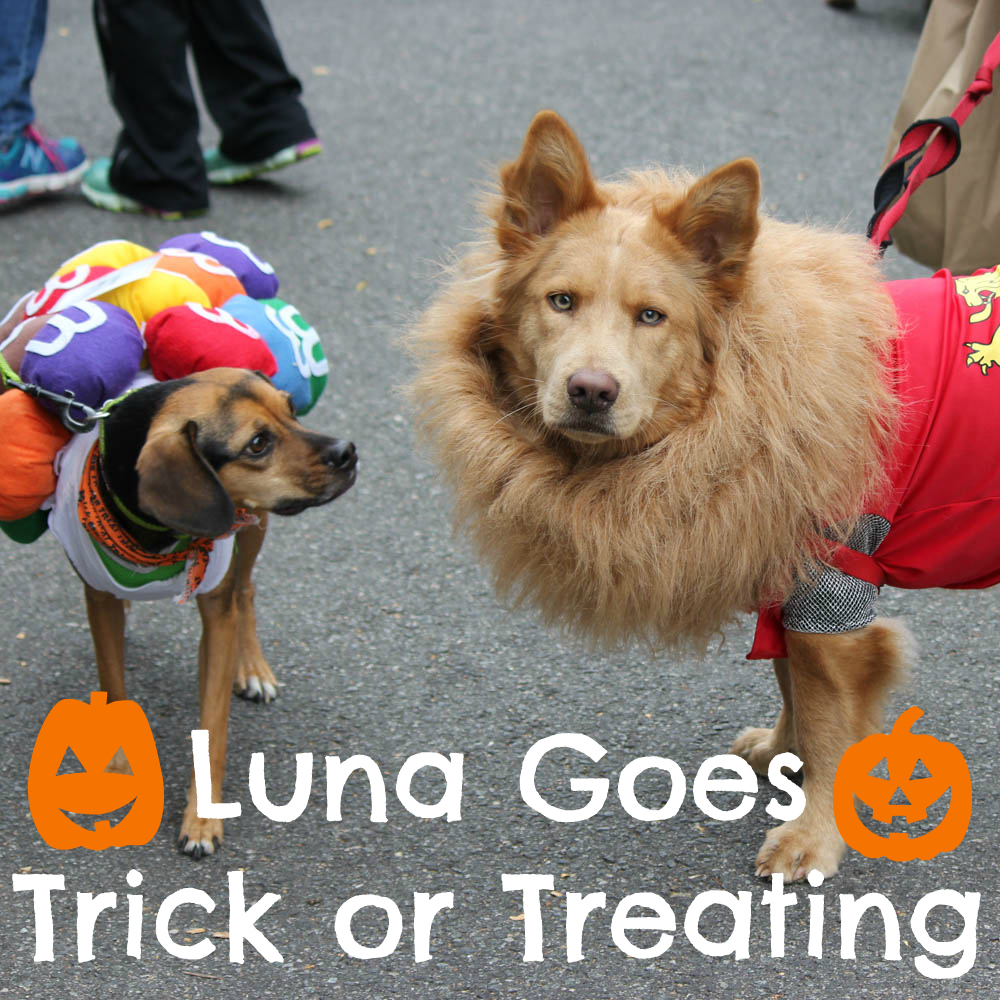 Luna Goes Trick or Treating
