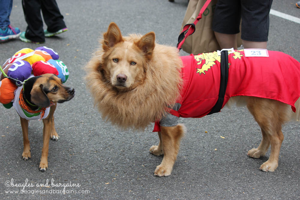 Luna meets a new friend dressed as Lion.