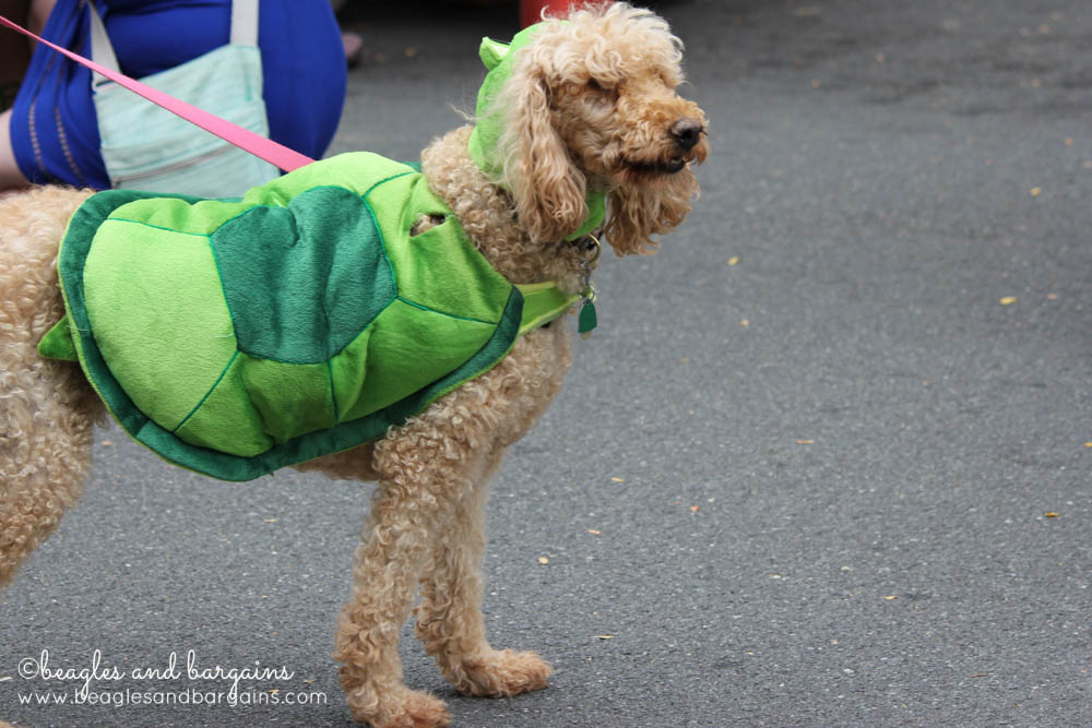Is that a Labradoodle or a Turtle?